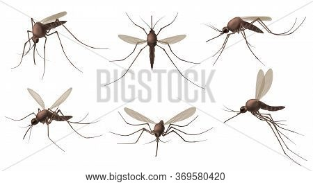 Realistic Mosquito. Blood Sucking Insects, Peddler Of Dengue, Zika Virus And Malaria Vector Isolated