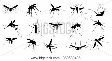 Mosquito Silhouette. Flying Mosquitoes, Swarm Insects Spreading Diseases, Dangerous Infection And Vi