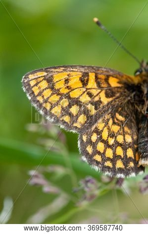 Vertical Selective Focus Shot Of Yellow And Black Butterfly Wing