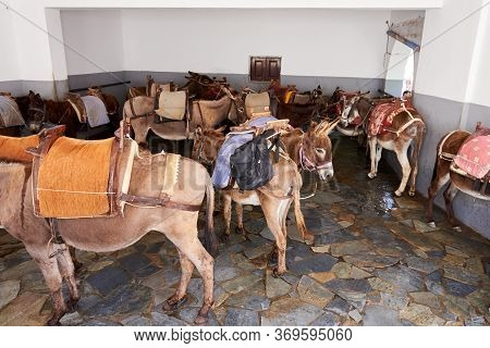 Rhodes, Greece - May 14, 2018: Donkeys Are Waiting For Tourists. Using Donkey Taxi To The Acropolis