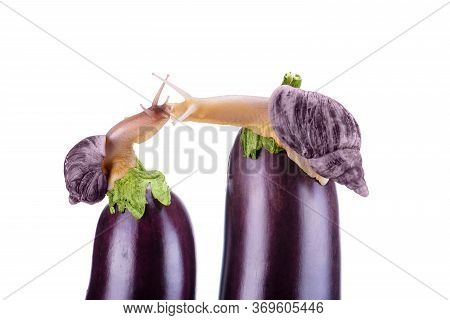 Snails Are Kissing. Snails And Eggplant On A White Background. Concept Of Delicious And Healthy Food