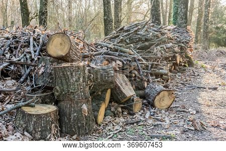 Stack Of Wood In The Forest. Concept For Autumn Season