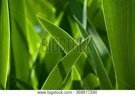 Green Grass In Background Of Bright Sunlight From The Back