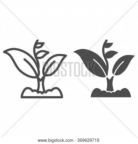 Sprout Grows With Many Leaves Line And Solid Icon, Gardening Concept, Sprout Symbol On White Backgro