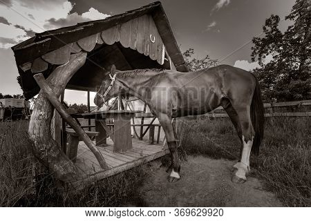 Old Horse Standing At The Summerhouse. Black White.