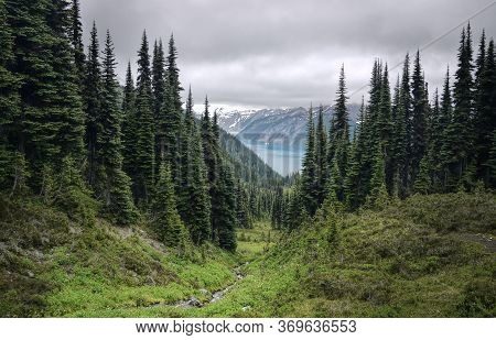 Glacial Mountain Garibaldi Lake With Turquoise Water In The Middle Of Coniferous Forest. View Of A M
