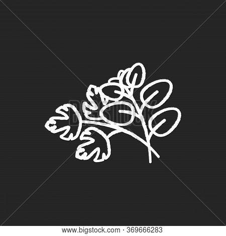 Fresh Herbs Chalk White Icon On Black Background. Scented Fresh Vegetable. Italian Nutrient Condimen