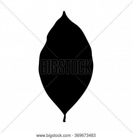 Jackfruit Plant Leaf Illustration, Black Vector Silhouette