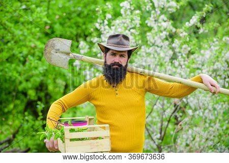 Gardener Work. Bearded Gardener With Gardening Tools. Man Farmer. Work In Garden. Farmer Hold Box. B