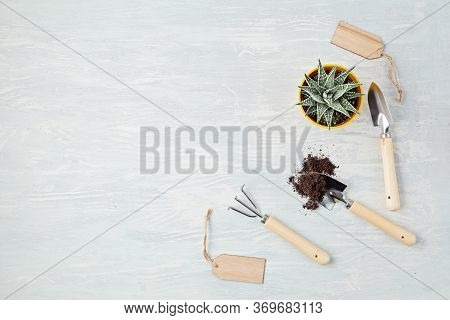 Home Plants And Gardening Tools. Potted House Plants Against Light Background. The Stylish Interior
