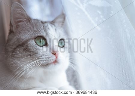 Close-up Of Snout Of  Beautiful Gray Cat. Muzzle Of A Beautiful White Cat On A White Background. Whi