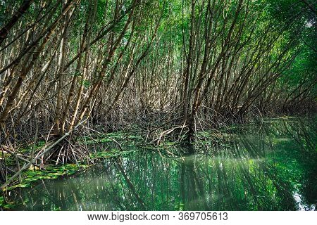 Scenic Mangrove Forest Ecosystem With Mangrove Roots And Green Lake Landscape Lake Mangrove Forest.