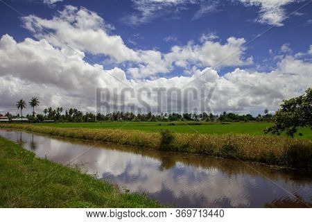 View Of A Beautiful Rice Field With A Canal And Palm Trees On A Clear Sunny Day Against A Blue Sky W