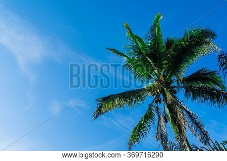 Palm Tree Against The Blue Sky. Tourist Destination Bali, Indonesia. Exotic Tropical Background.copy