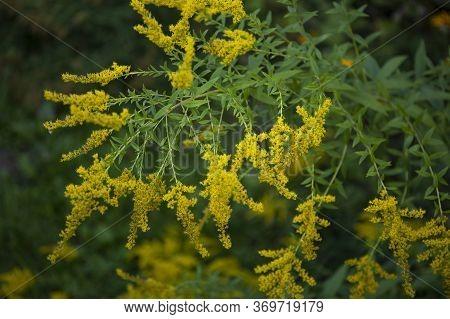 Low Key Lighting On Yellow Wild Field Flower
