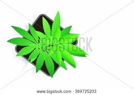 Cannabis Plant In A Pot On White Background. Vector Illustration Of Cannabis Sativa Or Cannabis Indi