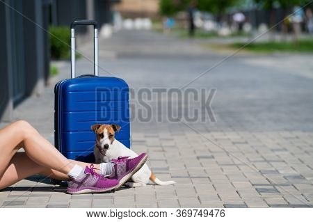 Faceless Woman Dressed In Shorts Is Sitting On The Sidewalk With A Pet. A Dog At The Feet Of Its Own