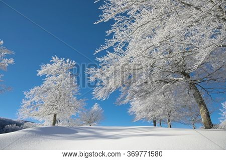 frozen trees on winter mountains of Sicily tourism outdoor activity
