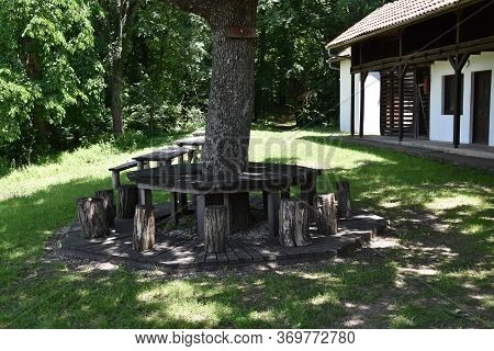 Table Made Of Wood And Stools Made Of Stumps Around Tree