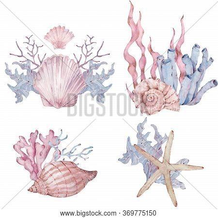 Watercolor Set Of Sealife Arrangements With Seashells, Seaweed, Starfish. Hand-drawn Marine Illustra