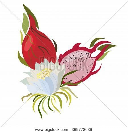 Dragon Fruit. Fresh Exotic Fruit For Healthy Dieting. Juicy Tropical Fruit With Seeds. Vector Dragon