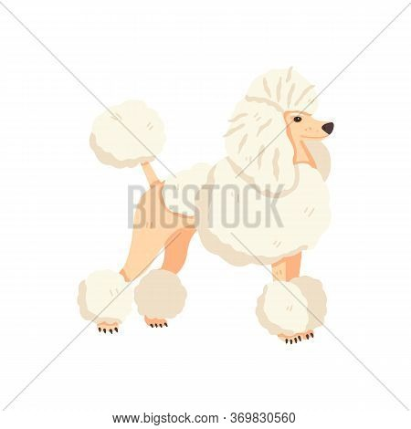 Poodle After Grooming Vector Illustration. Flat Pet Care Concept. Cute And Fun Hand Drawn Dog Breed.