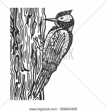 Woodpecker Bird Sketch Engraving Vector Illustration. T-shirt Apparel Print Design. Scratch Board Im