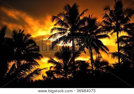 Palm trees silhouette at sunset