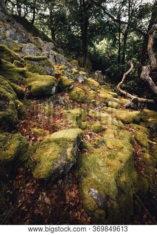 Giant Boulders And Rocks Covered By Yellow - Green Moss With Trees On Background. Moss On The Stones