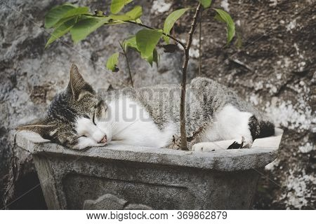 Young Cat, Not A Kitten Anymore, Sleeping In A Planter Illustrating Peace, Rest, Relaxation And Tran