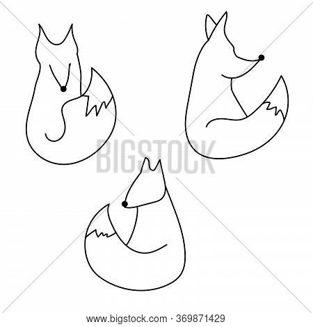 Outline Vector Fox Illustration, Foxes Set For Creativity And Design, Doodle Art For Your Inspiratio