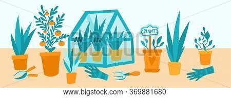 Greenhouse With Potted Garden Plants Vector Illustration, Cute Scandinavian Hygge Style. Glass Green