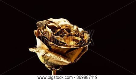 Eternal Beauty. Botany Concept. Beautiful Silver Flowers. Floral Shop. Metallic Steel Or Golden Colo