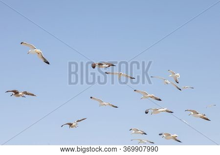 Sea Gulls On The Sand. White Gulls On The Coast Of The Atlantic Ocean In The Port