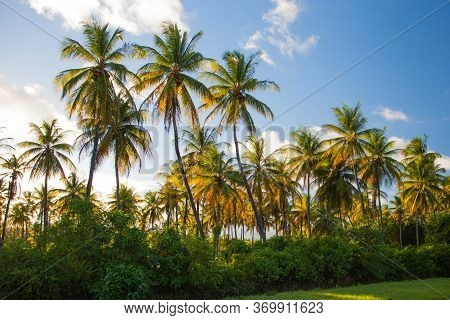 Coconut Trees In The Contrasting Light Of The Setting Sun Against The Blue Sky, A Game Of Colors. Th