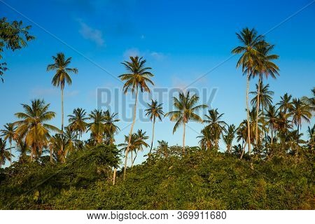 Beautiful Subtropical Palm Trees In The Rays Of The Setting Sun Against A Blue Sky. Landscape, Flora