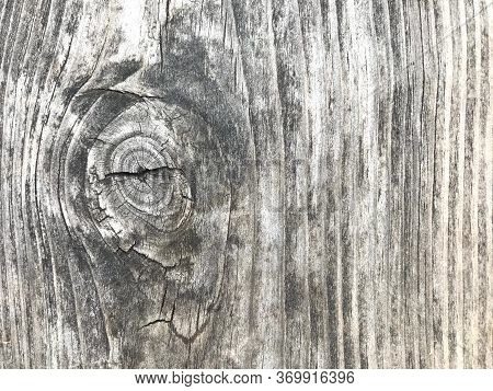 Beautiful Structure Of Old Tree With Bitches And Veins