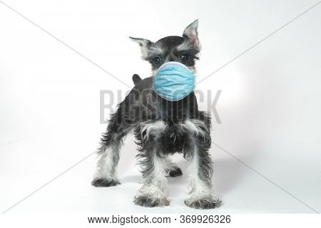Adorable Puppy Wearing PPE Mask