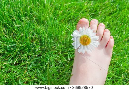 Child Feet With Chamomile On Green Grass In A Summer Park.