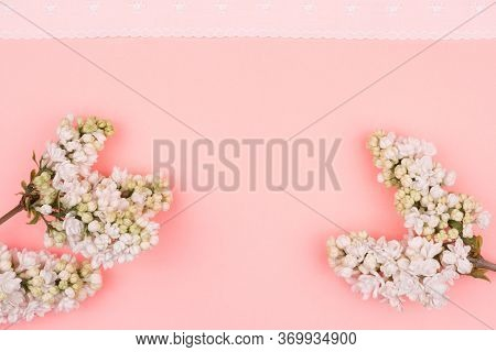 Spring Greeting Card On A Pink Background. Lilac And White Lace.