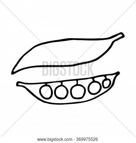 Pea Pod With Peas. Hand Drawn Outline Doodle Icon. Transparent Isolated On White Background. Vector