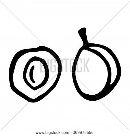 Plum With Kernel. Hand Drawn Outline Doodle Icon. Transparent Isolated On White Background. Vector I