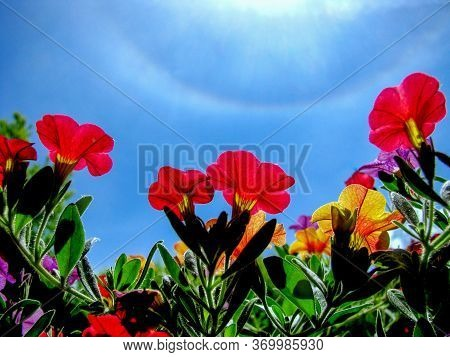 Red Flowers With Circular Rainbow Phenomenon In The Background