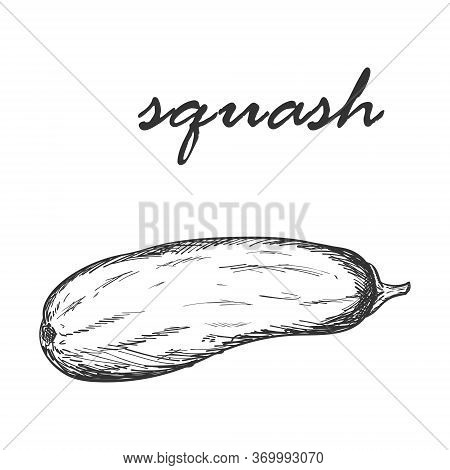Sketch Of A Whole Fresh Squash. The Textured Element Is Drawn By Hand And Isolated On A White Backgr