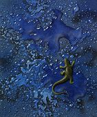 "picture painted by me named ""Wet Lizard"" it shows a yellow lizard in abstract blue backgrouns with roll off water beads seen from above poster"