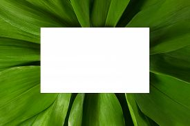 White Card With Copy Space On Green Tropical Leaves Background Flat Lay Top View. Creative Ecology L