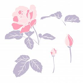 Pink Rose With Leaves And Two Buds Set. Simple Flat With White Outline Delicate Garden Flower For Lo