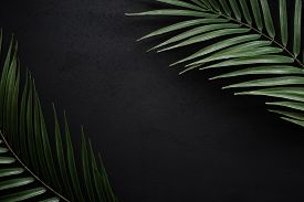Palm Leaves On A Black Matte Slate.