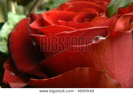 Red Rose Romantic Background