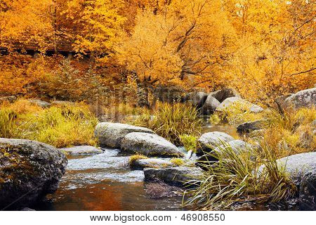 Autumn Park With Small River In Ukraine